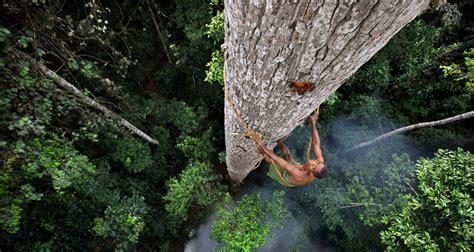 korowai tree houses the korowai people live in 50 metre tree houses as an