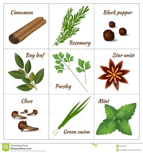 Set Of Different Culinary Herbs Or Medicinal, Curative