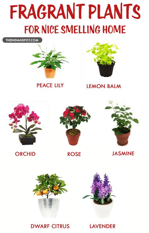 best fragrant indoor plants fragrant house plants for a smelling home