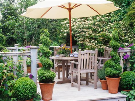 designed for outdoors creating a boxwood topiary hgtv