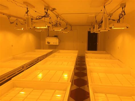 commercial grow room build out just waiting on license