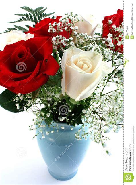 imagenes rosas blancas y rojas rosas rojas y blancas fotos de archivo imagen 8273483