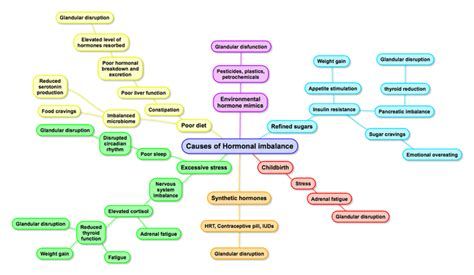endocrine flowchart pics for gt endocrine system flow chart