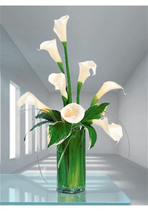 buy white calla lily in dubai uae discounted white calla
