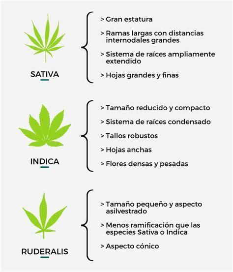 191 qu 233 es el cannabis losandesgrow