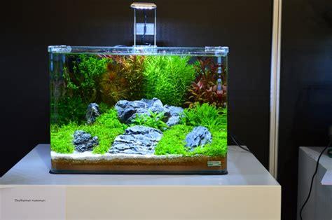 Aquascape Filters Ervaring Dennerle Scaper S Tank Aquafora