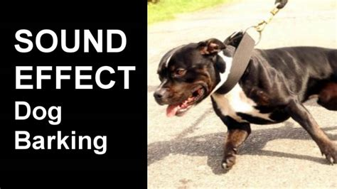 barking sounds september 2016 methods