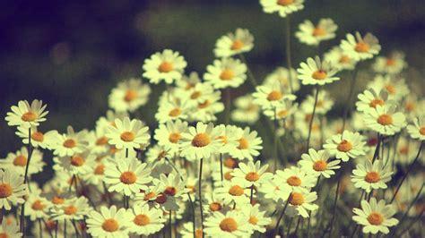 hd vintage flower backgrounds pixelstalknet