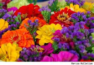 why are flowers brightly colored bright colored flowers get domain pictures