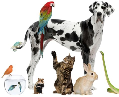 pet care sheltered pets get spruced up for big day marketshare