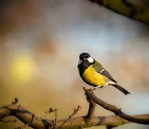 ls with birds on them winter wildlife watching alvecote wood