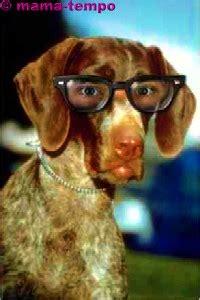 lustige hundebilder  ulk gag spass