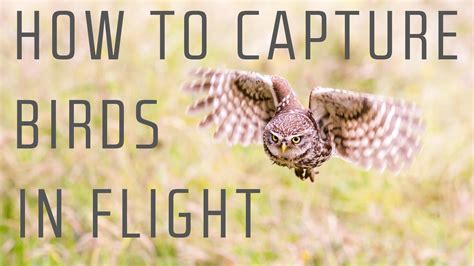 how to capture pattern in photography how to capture birds in flight wildlife photography