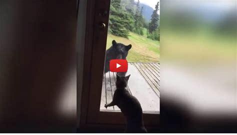 scacciare i gatti dal giardino c 232 un orso in veranda il gatto lo caccia via
