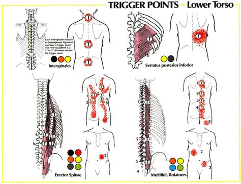lower arm tattoo pain level lower back pain gadibody com neuromuscular therapy