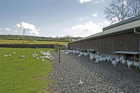 free housing free range chicken housing with inside my chicken coop 11992 chicken coop design ideas