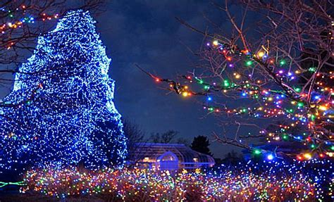 the 8 most beautiful christmas trees in america american