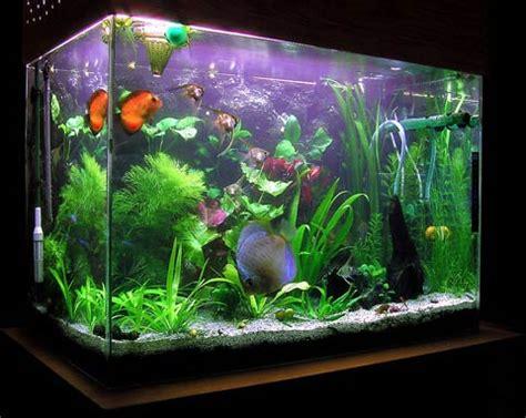 vendita vasche acquario vendita acquari su misura acquariofiliaitalia