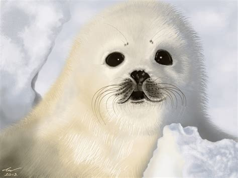 white seal pup painting of white seal pup animation by niveky on