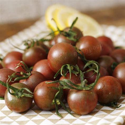 Purple Pearl Tomato 20pcs purple pearl tomato seeds high sugar balcony