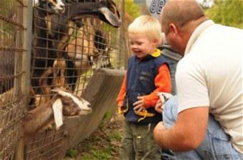 start  petting zoo business lovetoknow