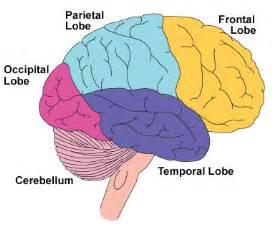 brain injury brain symptoms of brain injury