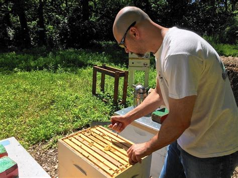 backyard beekeepers association naperville considering backyard beekeeping rules