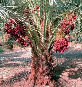 Minyak Almond Di Apotik 10 tanaman obat yang paling dicari zakinawawi
