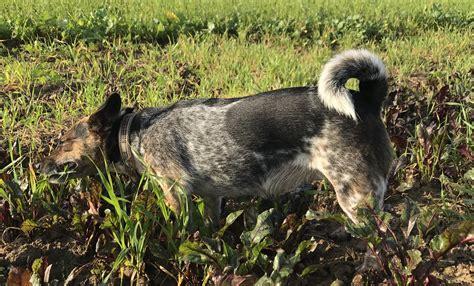 größe 74 wann wenn der hund gras frisst gibt es regen olewo