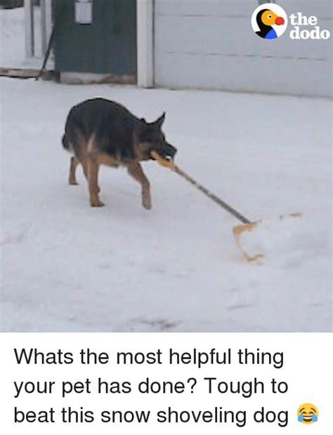 Shoveling Snow Meme - 25 best memes about snow shovel snow shovel memes