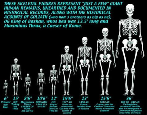 age to human age yufo age animal giants why not age human giants
