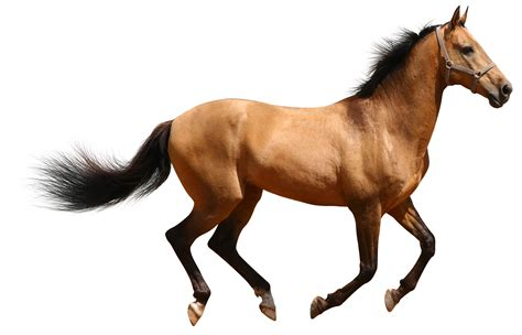 an horse real horses images clipart clipart suggest
