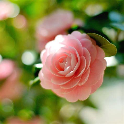 Blume Mit Rosa Blüten by Die 48 Besten Orchideen Hintergrundbilder