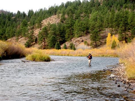 colorado fishing reports south platte south platte river deckers fishing report