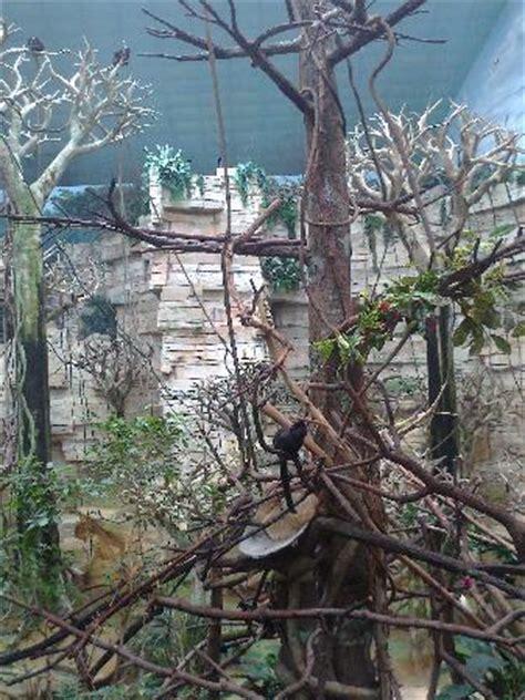 the monkey house the monkey house picture of brookfield zoo brookfield tripadvisor
