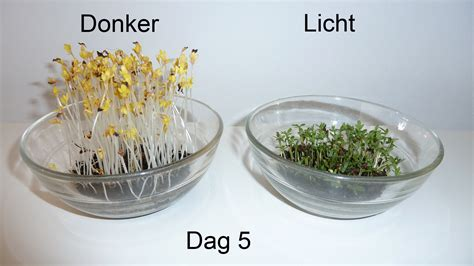 Plants That Need No Sunlight by Licht Vs Donker Tuinkers Com