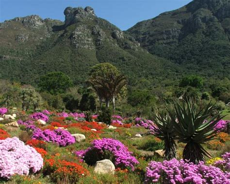 A Beginners Guide To Cape Town Thedepartureboard Botanical Gardens Cape Town