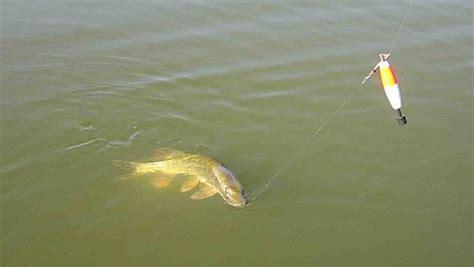 132524306x peche eau calme et p 234 che au vif l importance du flotteur