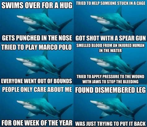 Funny Shark Meme - writing about writing and occasionally some writing