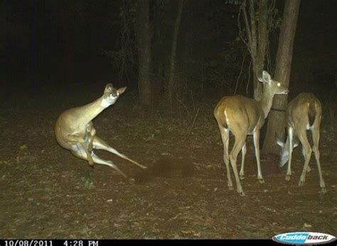 30 best trail cam photos that will never be recorded again
