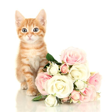 How To Decorate Your First Home Learn About Flowers Toxic To Cats Pollennation