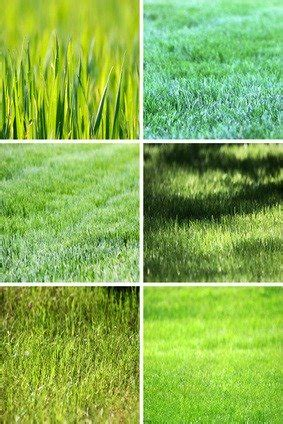 grass types for lawns cool season and warm season