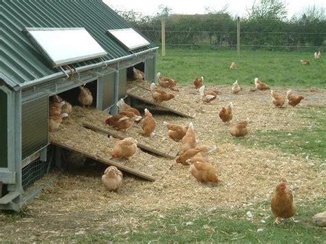 imagenes vintage gallinas adda actividades noticias