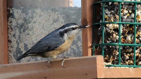 birds in your backyard setting up a bird feeding station in your backyard