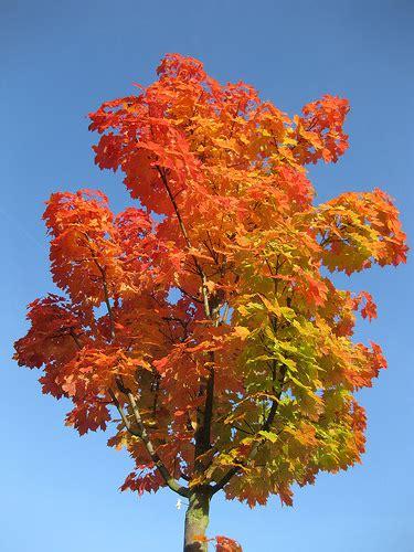 Fairish Flickr by Autumnwatch Flickr Favourites Part 3