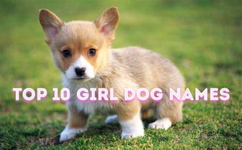 hawaiian puppy names image gallery hawaiian pet names dogs
