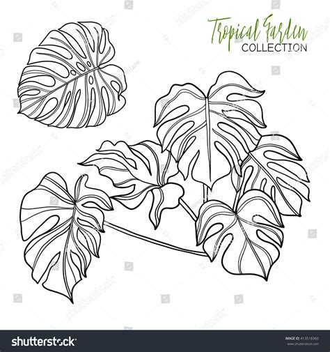 tropical leaf coloring coloring pages monstera tropical plant vector illustration coloring stock