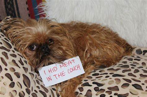 shamed dogs shaming a letter to my