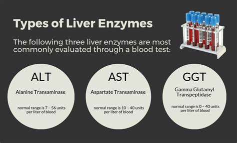 liver enzymes liver enzyme diagram image collections how to guide and refrence