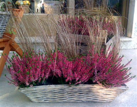 piante autunnali fiorite fioriere d autunno ecco quali piante mettere sul balcone
